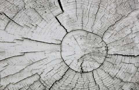 © Livingsee   Dreamstime.com - Abstract Background Tree Photo